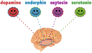 Brain chemicals-The key to happiness...