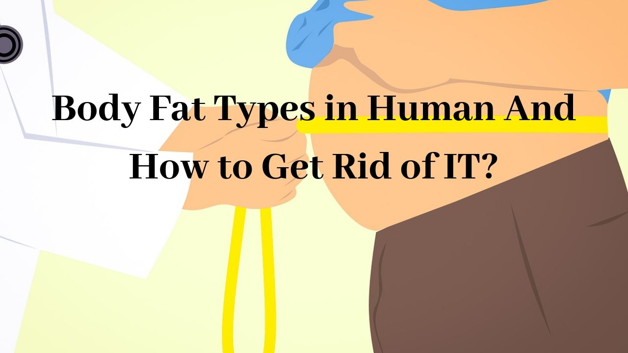 Body Fat Types in Human